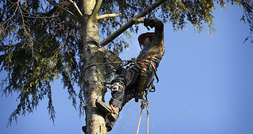4 Reasons to Call for a Professional Tree Care