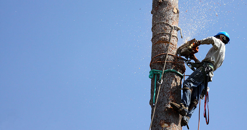 Finding the Best Arborist for Tree Removal